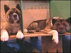 Dogs - generic image
