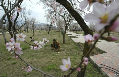 A gardener works in an orchard in Srinagar, in Indian-administered Kashmir