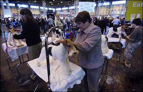 Dog owners tending to dogs at the show
