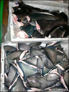 Shark fins (Oceana/LX)