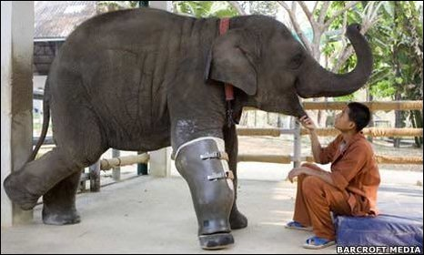 Mosha the elephant with a keeper