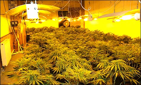 Bbc News Uk Scotland Edinburgh East And Fife Prison For Cannabis Factory Man
