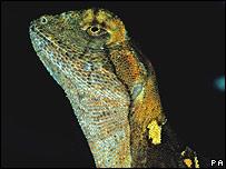 Reptil que habita en la Amazonía