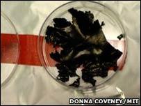 El nuevo material de fosfato de litio-hierro (FOTO Donna Coveney)