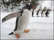 generic penguin