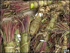 Khat bundle