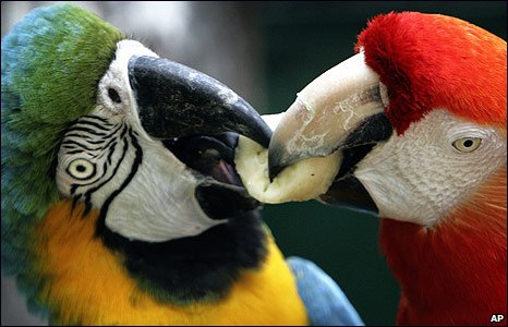 Two macaws in Bangkok's Dusit Zoo, Thailand