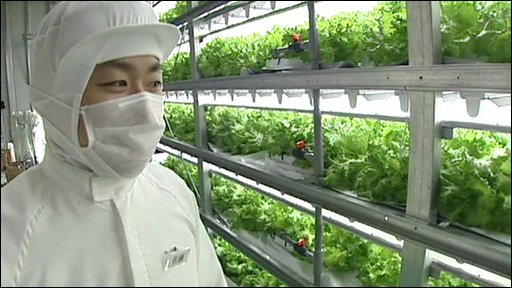 Lettuce factory worker