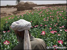 Poppy field in Farah province of southwest Afghanistan - 19/3/3009