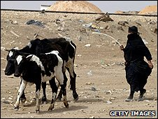 Iraqi woman herding cows (Getty Images)