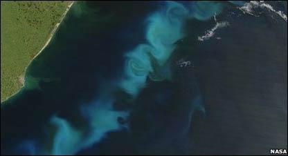 Crecimiento de algas en Argentina