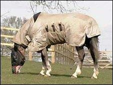 Pandora the horse