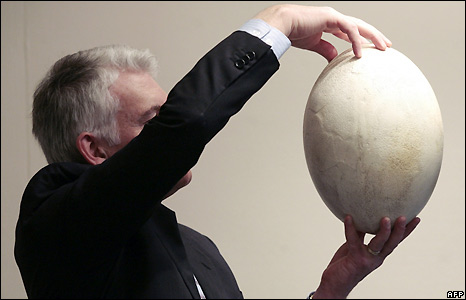 Egg of the now-extinct Great Elephant Bird of Madagascar, said to be the largest egg in the world