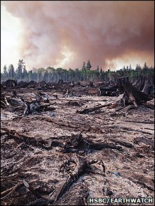Smoudering remains of a rainforest (Image: HSBC/Earthwatch)