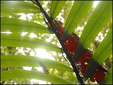 Tropical forest leaves (Image: Paul Harris/Earthwatch)