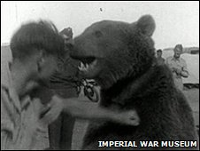 Voytek the bear - Picture courtesy Imperial War Museum