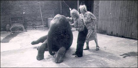 Sheila the elephant, along with Denise and her mother Irene in their backgarden in north Belfast