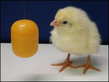 Chick and kinder ball