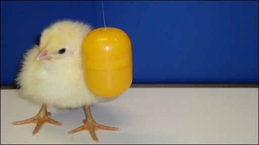 Chick and ball
