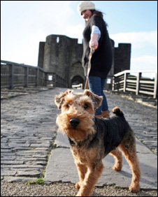 A dog on a lead at Caerphilly Castle