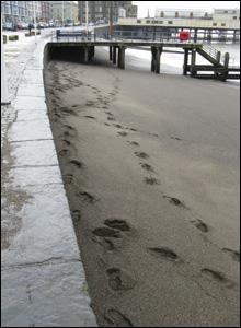 Footsteps in the sand soon after high tide in Aberystwyth (J Sutton).