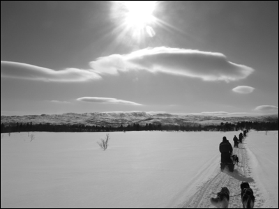 Sled dogs and sky by William Bradley