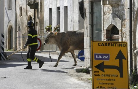 A firefighter leads a cow in the village of Onna