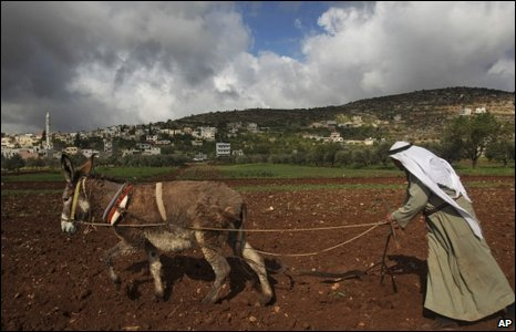 A donkey pulls the plough of an Arab farmer holding the reins