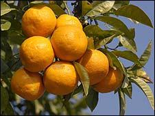 Oranges (file image)