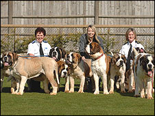 Some of the St Bernards with RSPCA officers (Picture provided by RSPCA)