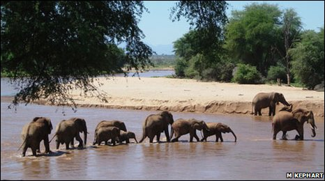 Elephant family traversing river