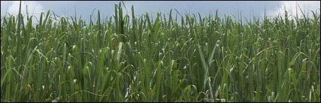 Brazil's biofuels