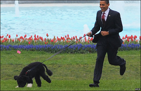 Barack Obama exercises his family's new dog, Bo, on the White House lawn, 14 April 2009