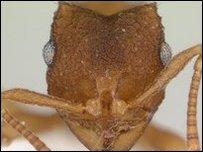 عالم النمل بدون نشاط جنسي
