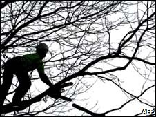 A tree surgeon - generic