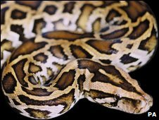 Generic pic of a python