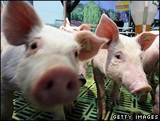 Piglets (file pic)
