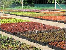 Solstice nurseries