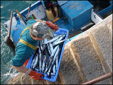Fisherman with box of mackerel