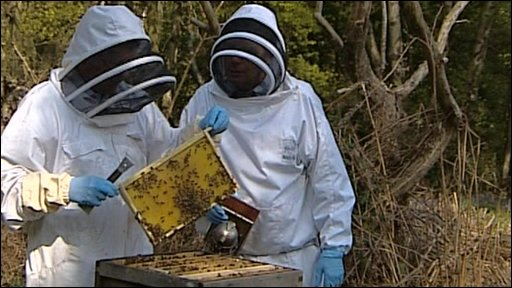 Two bee keepers looking at bees