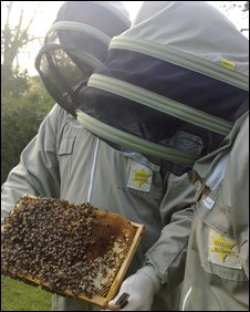 Bob Maurer and his bees, BBC
