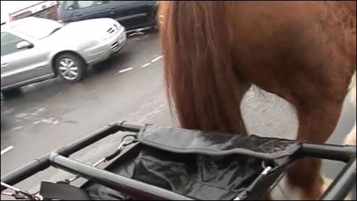 Horse poop scoop