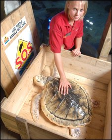 Willy, the Kemp's Ridley turtle and Claire Little, from Weymouth Sea Life