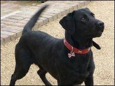 Missing dog Jack