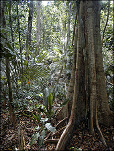 Tropical rainforest (Image: BBC)