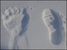 Bear and foot print