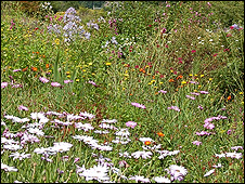 Meadow plants (Image: BBC)