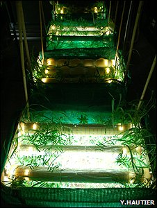 Plant experiments (Image: Yann Hautier_