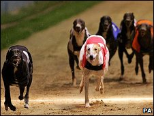 Greyhound race at Wimbledon