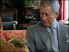Prince Charles with animated frog (Images: Prince's Rainforest Project)